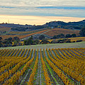 Fall In Wine Country by Jonathan Nguyen