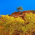 Fall In Zion by John M Bailey