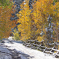 Fall Into Beartrap Meadow - Casper Mountain - Casper Wyoming by Diane Mintle