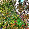 Fall Is Here by David Morefield