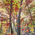 Fall Laser Beams by Debra and Dave Vanderlaan
