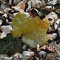 Fall Leaf by Alice Markham