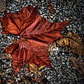 Fall Leaf by Sharon Meyer