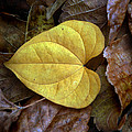 Fall Leaves 4 by Skip Willits