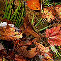 Fall Leaves 5 by Skip Willits