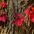 Fall Leaves Against Tree Trunk by Robert Storost
