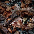 Fall Leaves And Acorns by Sharon Meyer
