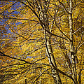 Fall Leaves And Trees In West Michigan No171 by Randall Nyhof