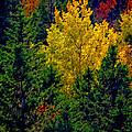 Fall Leaves by Bill Howard