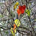 Fall Leaves by Cynthia Guinn