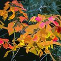 Fall Leaves by David Fishter
