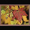 Fall Leaves by Diane Hagler