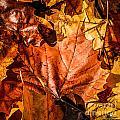Fall Leaves by Grace Grogan