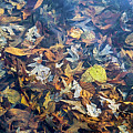 Fall Leaves In A Pond by Brian Wallace