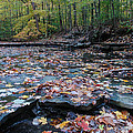 Fall Leaves In The Creek by Paul Quinn