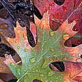 Fall Leaves I V by Jim Smith
