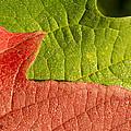 Fall Leaves by Joan Wallner