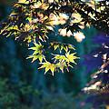 Fall Leaves by John Lan