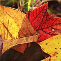 Fall Leaves by Melinda Fawver