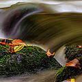 Fall Leaves On Mossy Rocks by Greg Mimbs