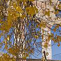 Fall Leaves On Open Windows Jerome by Scott Campbell