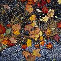 Fall Leaves On Pavement by Elena Elisseeva