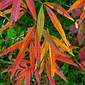 Fall Leaves by Robert Storost