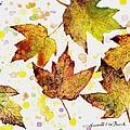 Fall Leaves by Van Bunch
