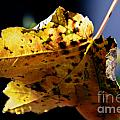 Fall Maple Leaf by Dale Powell