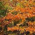 Fall Mix by Gene Cyr