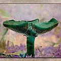 Fall Mushroom 17 by WB Johnston