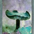 Fall Mushroom 18 by WB Johnston