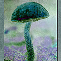 Fall Mushroom 19 by WB Johnston