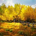 Fall Near Lake City by Marty Koch