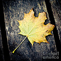 Fall Of The Leaf by Sviatlana Kandybovich