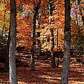 Fall On A Stump by Robert Frederick