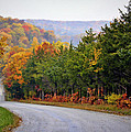 Fall On Fox Hollow Road by Cricket Hackmann