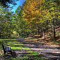 Fall On The Biketrail by David Dufresne