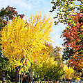 Fall On The Esplanade  by Abram House
