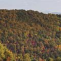 Fall Palette by Teresa Mucha