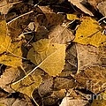 Fall by Peggy Hughes
