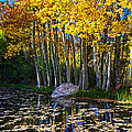 Fall Pond In Mammoth by Lynn Bauer