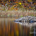 Fall Reflections by Bianca Nadeau