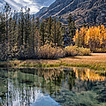 Fall Reflections by Cat Connor