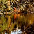 Fall Reflections by Holly Blunkall