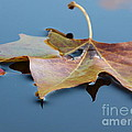 Fall Reflections by Jane Ford