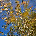Fall Reflections by Skip Willits