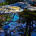 Fall Reflections  by Tracy Westfall