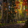 Fall Road by Jeff Shumaker