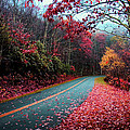 Fall Road by Kevin Cable